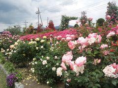 中野・坂城、薔薇めぐり