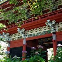 6月の花と鳥を探して、茨城プチ旅行