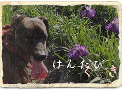 犬旅 ~久喜~