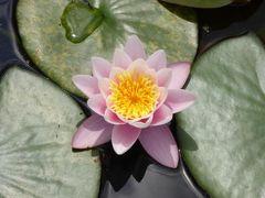初夏の優雅な北イタリア旅行♪ Vol153(第10日目午後) ☆バレッジョ・サン・ミンチョ(Valeggio s.Mincio):憧れの庭園「Parco Sigurta Giardino」 広大なスイレンの池にカラフルな花♪