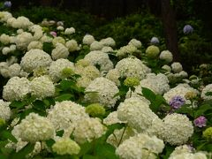 横浜八景島シーパラダイス あじさい祭り 2014年6月22日