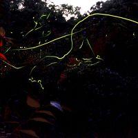 日光だいや川公園とんぼ池に舞う蛍の明かり