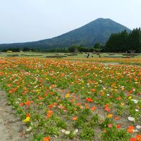 生駒高原のポピー祭りはとっても素晴らしかった~!◆2014年5月・JALで行く宮崎の旅≪その3≫