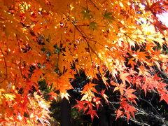 初冬の明月院は真っ赤な紅葉に染まります。