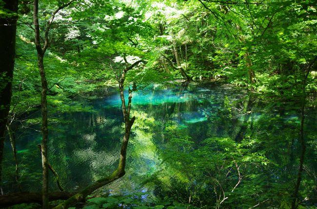 白神の森に続き、十二湖へ。どちらも日本の森って感じで緑がすごくキレイでした♪<br />