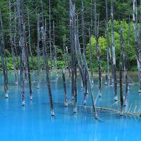 ウニとラベンダーの季節到来!北海道初夏の旅 ④青い池、四季彩の丘と美瑛野菜のランチ
