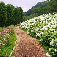 <東京サマーランド・あじさい園>梅雨空のそこはあじさいの楽園だった・・・「アナベルの雪山」