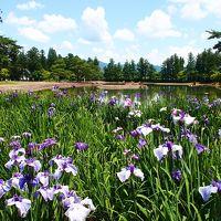 平安時代の優美な庭園で、あやめを愛でて・・・ ~世界遺産・毛越寺(平泉)~