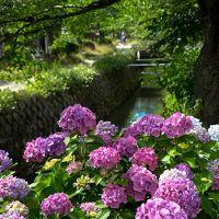 京都で癒されてくる 2日目 三千院、実光院、宝泉院、貴船ひろや、貴船神社、哲学の道