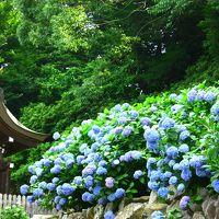 原チャでゴー!第110弾−一大事だ!御隠居!路銀が底を尽きやしたぜ・・ははは,八兵衛や慌てるではない,吉備津神社で満面に咲き誇った紫陽花を愛でようではないか!