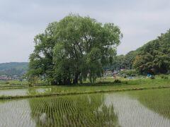 奥州古道歩き No6. 芭蕉さんも立寄った遊行柳で有名な芦野宿(6)から、福島県境へ