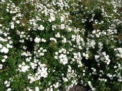 そうだ花を見よう!!~ローズカントリー~