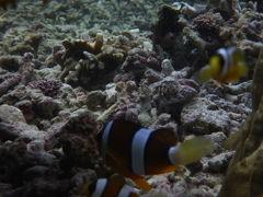 特集No4.沖縄、宮古の伊良部島、白鳥崎&サバウツガーの海の中