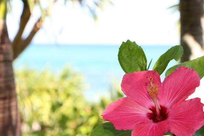 息子が生まれて初めての夏休み!<br />海外も含めてどこに行こうか迷いましたが、<br />0歳児を連れての海外はハードルが高かったので、<br />沖縄でのんびり過ごすことに決めました。<br />去年は妊娠中の為に遠出できなかったので、久しぶりの飛行機にワクワクします♪<br />息子7ケ月。5泊6日沖縄旅。<br />日中の日差しに気を付けながら楽しんで来たいと思います。<br /><br /><br />7/9 1日目 国際通りブラブラ ⇒ いつ世(居酒屋) ⇒ ロコアナハホテル