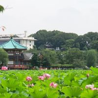 えきぽで散策@御徒町駅 〜梅雨の中休み、下町ぶらり旅編〜