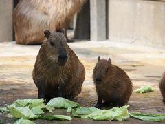東武動物公園②カピパラ親子も