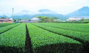 畑を見ながら日本一周
