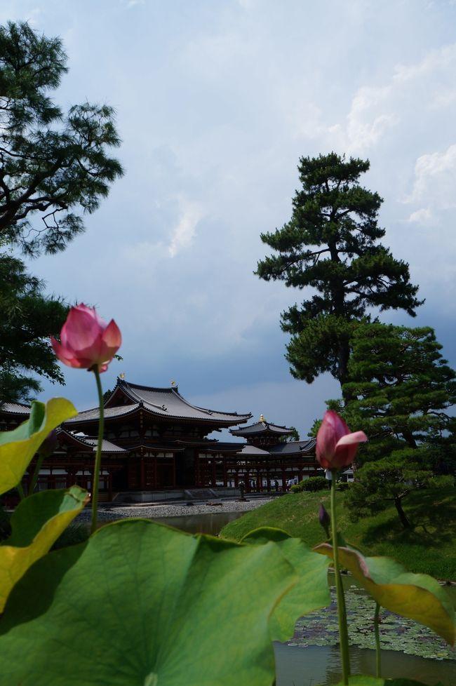 6月終わりごろ、去年も京都に一緒に行った、そして高校時代から京都に一緒に行っている仲のいい友達Aちゃんと今年もどっか行きたいという話に。はじめは北海道でラベンダー畑を見たいねなんて話していましたが、夏の北海道、高い!!<br />あーだこーだ相談した結果、「もうさ、京都いっちゃう?」ってな話に。。。<br />そう、京都は我等の癒しスポットですし!!ってことで、去年に引き続き、今年も真夏の京都に行ってきました!<br /><br />とりあえず初日は、Aちゃんが行った事ないスポット、宇治!!平等院もきれいになったってことで行って来ましたよー!1日目は、<br /><br />新幹線の中で待ち合わせ<br />↓<br />京都着!早速無駄に京都駅内をショッピング。<br />↓<br />まだ何もしてないのにマールブランシュ北山で一息♪<br />↓<br />やっと宇治着。すぐにお昼食べたい、ってことでご飯。そしてかき氷。<br />↓<br />ついに平等院!<br />↓<br />宇治神社、宇治上神社。うさぎみくじかわいい!<br />↓<br />中村藤吉本店。<br />↓<br />なぜか牛角で焼肉食べ放題からの新京極界隈ショッピングでワンピースやらTシャツやら靴下やら購入。<br /><br />ってな感じです。