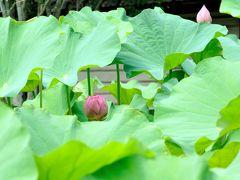 古の奈良の都におわします みほとけのおんかんばせ。それは究極のい・や・し!蓮の花咲くお寺をお坊様と巡るツアーに参加しました。
