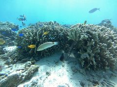 魅惑の島旅 真っ白なビーチと青のグラデーションの海が広がる水納島でシュノーケルを楽しむ