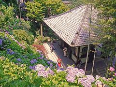鎌倉(2014年6月)~紫陽花巡り(成就院・御霊神社・長谷寺・名月院)