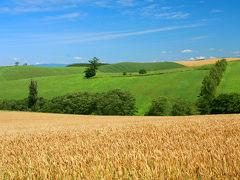 今が見頃!ラベンダー色に染まる富良野へ(その4、麦秋の美瑛の丘)