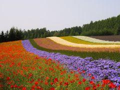 北海道旅①富良野・美瑛~お花畑に癒される~