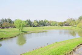 古河総合公園でバードウォッチング [2014](1)
