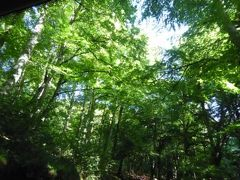 真夏の優雅な南イタリア旅行 Napoli×Puglia♪ Vol29(第3日目午後) ☆Foresta Umbra:ヨーロッパ南限のブナ原生林を疾走♪