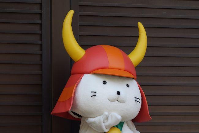 ゆるキャラブームの火付け役、ひこにゃんの故郷:彦根を訪問です。<br /><br />井伊家2代目直孝が、豪徳寺にある木の下で雨宿りを<br />していた時、手招きしている白猫を目にします。<br />直孝が白猫に歩み寄った瞬間、雨宿りしていた木に雷が落ち、<br />難を逃れたのは白猫のおかげと、豪徳寺を菩提寺にしたそうです。<br /><br />この白猫が、ひこにゃんの由来だそうです。<br />井伊家由来のネコと言う事で、井伊家の赤備えの兜を被っています。<br /><br />豪徳寺は、白猫のおかげで多くの寄進を受けた事もあり、<br />白猫が死んだ後、和尚さんがネコのお墓を建てて祀ったそうです。<br />のちに右手を上げている招福猫児(まねぎねこ)が作られるようになり、<br />これが現在の招き猫の由来の一つとなっているそうです。