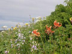 花の鳥海山に登る・・・特集・鳥海山登山で見たコース沿いに咲く高山植物達♪