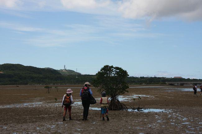 旅行記③は4泊した西表島です。表紙写真は、潮がひいて歩けるようになったマングローブの森。干潟はじめて歩いたよ。見たことがない別世界!<br />1泊は星野リゾートニラカナイ、3泊はニライナリゾートに宿泊しました。<br /><br /><br />・・・・・・・・・・・・・・・・・・・・・・・・・・・・・・・・・<br />2013年8/1~8/10までの家族旅行、沖縄。<br />去年は日本の最北端に行ったから、今年は最南端に行こう!というのがきっかけ。<br />我が家の今回の旅のテーマと「沖縄ならではの美しい海や植物、星空、自然を家族で満喫したい!」ということ。感動をいっぱいして、全身で感じるってステキ。<br /><br />そして子どもたちには、自分たちの住んでいる「日本」が長い長い列島であることを感じてほしい、同じ夏だけど、北海道と沖縄の気候の違いや特色を肌で感じてほしい、楽しい沖縄だけれど悲しい戦争の犠牲になったこと、ビーチリゾートとしての沖縄以外の面を知ってほしい、親としてはそんな願いもこめて企画。<br /><br />沖縄本島1泊、石垣1泊、波照間島2泊、西表島4泊しました♪<br />お天気に恵まれ、最高な沖縄旅行でした。<br /><br />