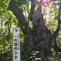志賀高原でアサギマダラに出会う