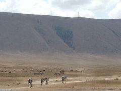 陶器婚記念!タンザニアへ~クレータの底は野生の王国・ンゴロンゴロ自然保護区