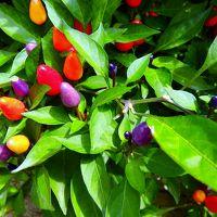京都府立植物園の(ローカル限定)話題 2つの花 ~新しいカメラを手に出かけてきました~