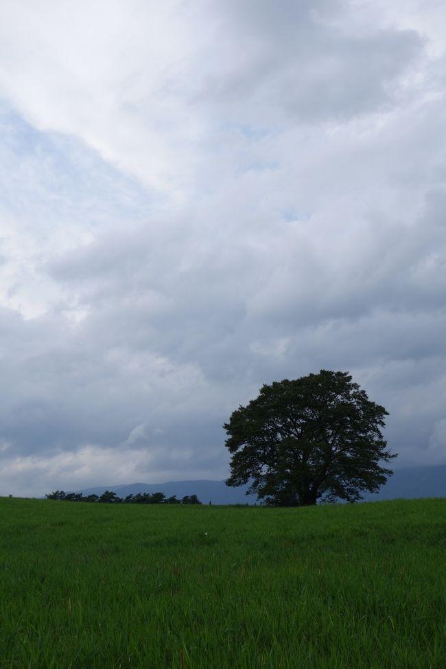 日帰りで岩手県にある小岩井牧場へ行ってきました。<br /><br />岩手県に行くのは今回初めてで、雨の予報にもかかわらず<br />雨は降らず、ゆっくり観光出来て良かったです。