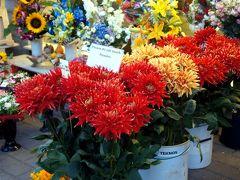 花とキュートのあふれる町・タリン~2014年夏 バルト4国+ポーランド・WWⅡと独立の軌跡3