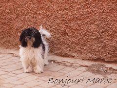 ボンジュー! モロッコ   (1) 憧れの地・モロッコ