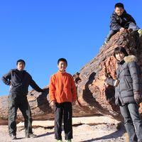 家族4人で年末年始アメリカの旅 4日目 化石の森編