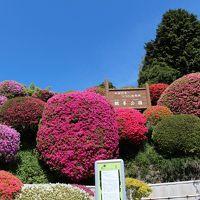 信州 岡谷「鶴峯公園 2014ツツジ祭り」