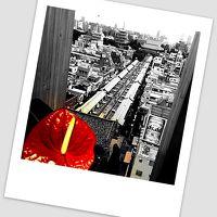 1.カオス目線で浅草浮遊(一時帰国の際に浅草を歩いてみる/浅草)