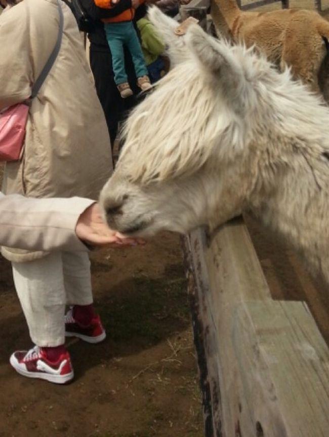 日帰りバスツアーでマザー牧場に行きました。途中海ほたるで休憩です。マザー牧場は広々しており自然がたっぷりで山なので涼しいです。羊、ヤギ、アルパカ、モルモットなどの動物とふれあえます。行列でしたが、牛の乳しぼり体験、子羊と記念写真撮影をし、シープショーを見ました。他にも季節によっていろいろと盛りだくさんなので事前に確認し、到着後はイベントの時間確認をしたら良いと思います。ソフトクリーム美味しかったです。