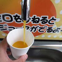 2014 広島遠征はW観戦&愛媛ドライブ【その3】ミカンジュースの出る蛇口としらす丼