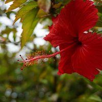 二度目の沖縄離島(石垣島•竹富島)