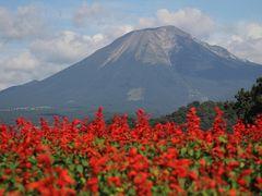 201409-03_とっとり花回廊 Tottori Flowers Park / Tottori