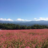 花と景色をもとめてのドライブ