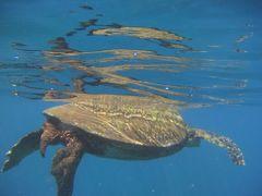 14'ハワイ個人手配の旅 カウアイ島  観光 その2 ブルー ドルフィン チャーターズで行くナ・パリ・コースト