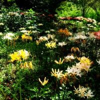みろく自然公園の彼岸花