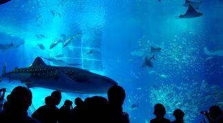 2014.7沖縄職員旅行3-沖縄美ら海水族館