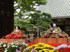 富田林 じないまち 【後のひな祭り】 菊雛ってご存じですか?